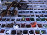 いろいろな種子2@エコカフェ.JPG