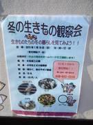 冬の生き物観察会.JPG