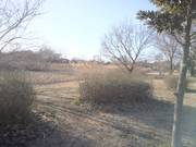 大宮第三公園.JPG