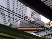 東京駅屋根@エコカフェ.JPG