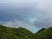 母島の湿生高木林と沸き立つ雲.JPG