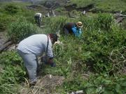 草刈り@エコカフェ.JPG