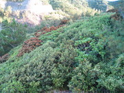 長崎展望台から乾性低木林を望む.jpg
