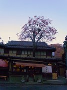 高尾山そば三杯目3@エコカフェ.JPG