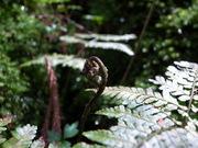 edible wild plants@エコカフェ.JPG